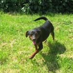 Juju , adopté le 20/05/2016