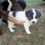 Naya (chiot 2 mois)  adoptée en Septembre 2017