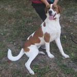 Nellie  croisée  adoptée en Novembre 2018