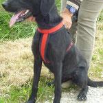 Juju, adoptée en septembre 2015