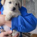 Ouchka  chiot adoptée en Novembre 2018