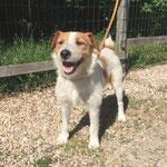Igor adopté en Juillet 2016