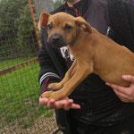 Nova petite chienne croisée adoptée en Mars 2018