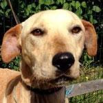 Jopi, adopté en janvier 2016