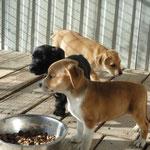 Léo, Lulu, Lalie, Lena, Luna, adoptés en novembre 2015