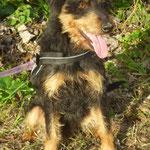 Imba, adopté en janvier 2016
