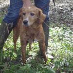 Coxie, adoptée en janvier 2016