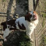 Hélias , adopté le 05/04/2016