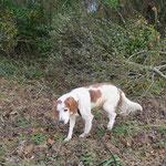 Ulysse, adopté en décembre 2015
