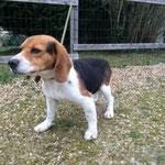 Diabolo, adopté en février 2016
