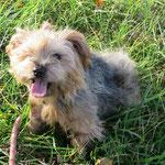 Axel, adopté en décembre 2015