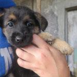 Orka  chiot adoptée en Novembre 2018
