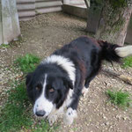 Jasper , adopté le 06/06/2016