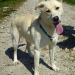 Leya , adoptée le 02/05/2016