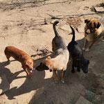 Cleo bei den anderen Hunden