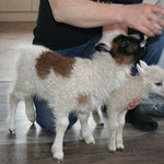 We helped a neighbour during lambing season, after it was over we had to bottle lambs