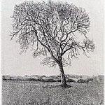8.- La voz del Árbol (V), Aguafuerte, 18,5 x 12 cm., soporte 38 x 27 cm.