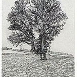 4.- La voz del Árbol (I), Aguafuerte, 18,5 x 12 cm., soporte 38 x 27 cm.