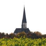 Ansicht auf unsere Basilika über die Rapsfelder hinweg     Foto: Bernadette FS
