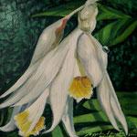 Orquidea 1, 20cm x 20cm, acrilico sobre tela, 2010, disponible
