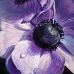 Detalle van paarse anemonen.