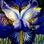 Iris azul, 20cm x 20cm, acril sobre tela, 2010. disponible
