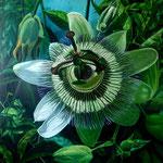 Pasie flora, 120cm x 120cm, acrilico sobre lino, 2010, DISPONIBLE
