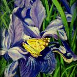Mariposa e iris azul, 20cm x 20cm, acrilico sobre tela, 2010, VERKOCHT.