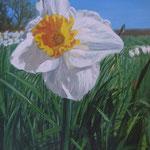 Narciso blanco, 40cm x 30cm, alquico sobre panel, 2008.