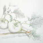 Gemüsemusik 1 - Bleistiftzeichnung laviert - 0,40 x 0,30, m. R. 0,60 x 0,50