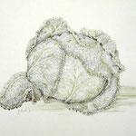 Gemüsemusik 3 - Bleistiftzeichnung laviert - 0,40 x 0,30, m. R. 0,60 x 0,50