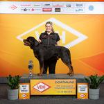 V1 Frühjahrsjugendsieger J-CAC & BOB Bester Junghund