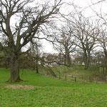 Biologische Landwirtschaft und alte Baumbestände