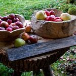 Apfelernte 2013 - und jeder hat seinen Platz!