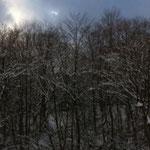 雪がのった木の枝はきれいです