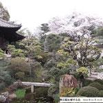3位 桜と鶴亀の庭