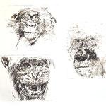 Drei Affen, Kaltnadelradierung 2016