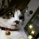 オーダー:猫ちゃんの首輪