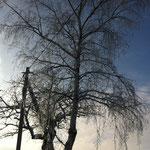 Kalter Wintertag 2013/2014 - auf dem Weg zum Finckenfang. Foto: © D. Rülke