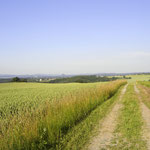 Blick vom Mittelweg Richtung Lilienstein u. Festung Königstein. Foto: © S. Weirauch