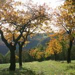 Herbststimmung auf dem Winzerweg in Maxen. Foto: © J. Tronicke