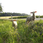 Landleben zwischen Maxen und Schmorsdorf. Foto: © S. Weirauch
