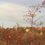 Herbststimmung über Maxen. Foto: © U. Horst
