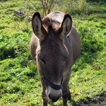 Ein idyllisches Zuhause für Esel. Foto: © D. Kunze