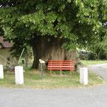 Ruheplatz an der Tausendjährigen Linde in Schmorsdorf. Foto: © S. Weirauch