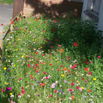 Jachère fleurie des enfants de la maternelle - 2012