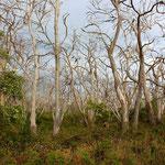 Cape Otway National Park