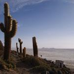 Incawhasi - eine Insel voller Riesenkakteen