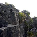 """Die """"Pancake-Rocks"""" in Punakaki"""