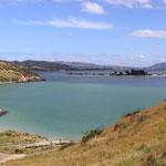 Ein Ausflug zur Otago-Peninsula...